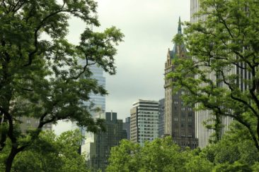 out of the central park