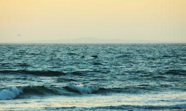 willkommens-delphine in Mexiko