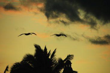 Pelikane im Sonnenuntergang