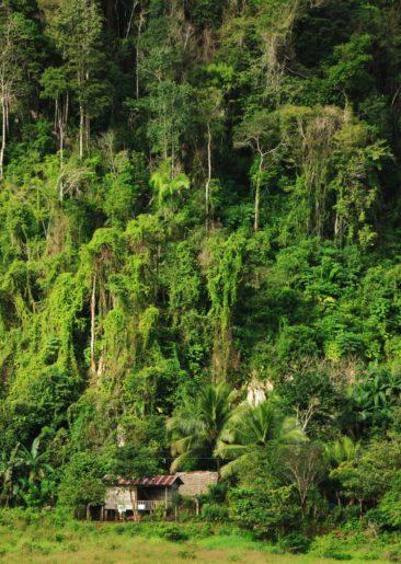 Dschungelhaus